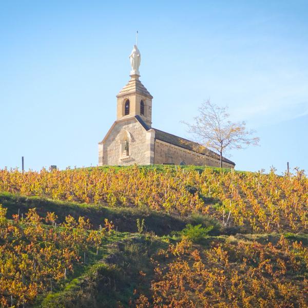vignes-automne-fleurie-madone-hd-cinter-beaujolais-10